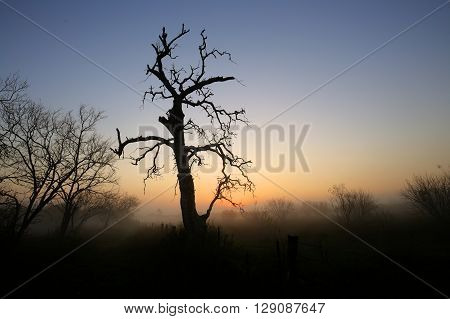 Dead tree silhouette along fence on foggy winter morning
