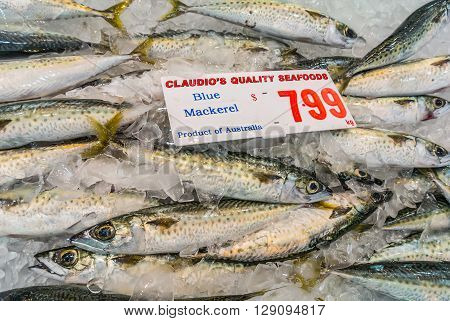 Sydney Australia - November 11 2014: Fresh Blue Mackerel on the Famous Sydney Fish Market Sydney New South Wales Australia. 52 tonnes of seafood are selling at auction on this market every day.