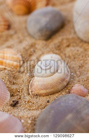 Natural sea shells on sand