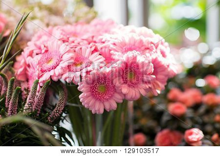 gardening, floristry, sale, holidays and flora concept - close up of pink gerbera at flower shop