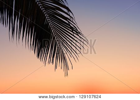 Silhouettes Of Palm Tree Leaf On A Tropical Beach At Sunrise