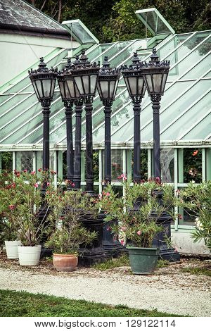 Potted flowering plant and old lamps in orangery near the Festetics palace Keszthely Zala Hungary. Gardening theme. Castle and gardens. Travel destination. Glass-house.