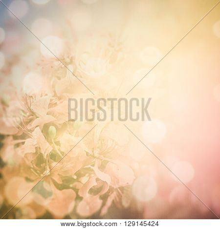 Red Flamboyant flower on paper in soft and blur style for background