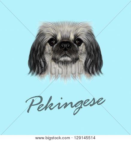 Vector Illustrated portrait of Pekingese dog. Cute fluffy face of Pekingese dog on blue background