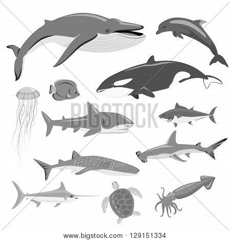 Marine fauna set of aquatic animals. Aquatic fauna, ocean or sea fish wildlife fauna, underwater aquarium exotic life fauna, dolphin water wild vector illustration isolated on white poster