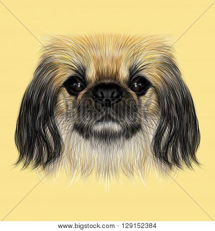 Illustrated portrait of Pekingese dog. Cute fluffy face of Pekingese dog on yellow background