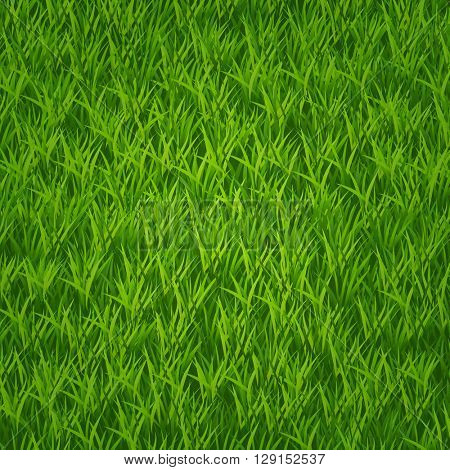 Green grass field. Vector 10eps