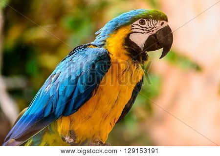 Ara Parrot Tropical Bird