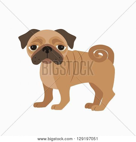 Flat pug pet illustration. Standing cute dog vector. Flat dog animal pet vector icon. Home cartoon standing pug in flat style. Dog colorful silhouette isolated on white background