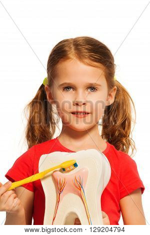 Girl with pigtails holding tooth model and brush for education of hygiene, isolated on white.