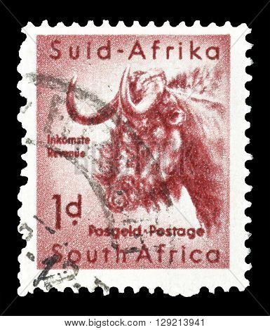 SOUTH AFRICA - CIRCA 1954 : Cancelled postage stamp printed by South Africa, that shows Gnu.