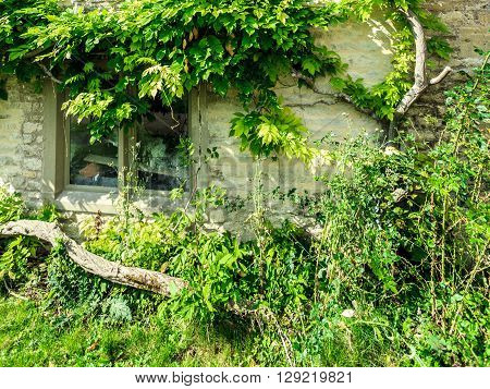Architecture detail. Old stone house with small window and green trees ivy village Bibury England