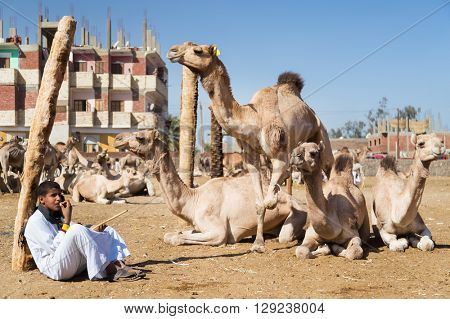 DARAW, EGYPT - FEBRUARY 6, 2016: Young local camel salesman sitting next to camels at Camel market.