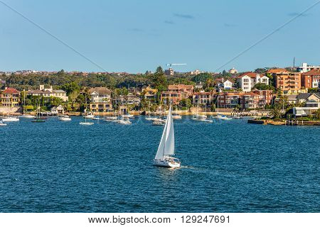 Sydney Australia - November 12 2014: Sailing boats and residential housing in Rose Bay Sydney New South Wales Australia. Rose Bay is a harbourside eastern suburb of Sydney 7 kilometres east of the Sydney central business district.