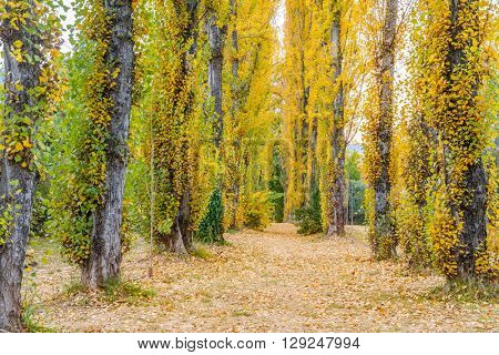 Collection of Beautiful Colorful Autumn Leaves