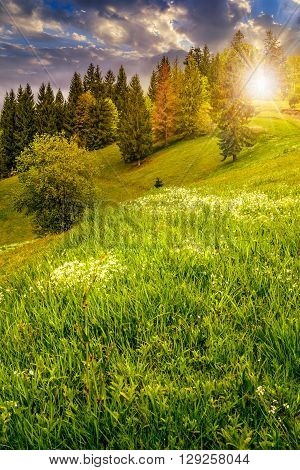Forest On Hillside Meadow In Mountain At Sunset