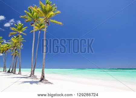 Coconut Palm trees on white sandy beach in Cap Cana Dominican Republic