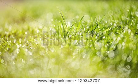 Abstract background with bokeh with a green grass in dew lit with the sun.