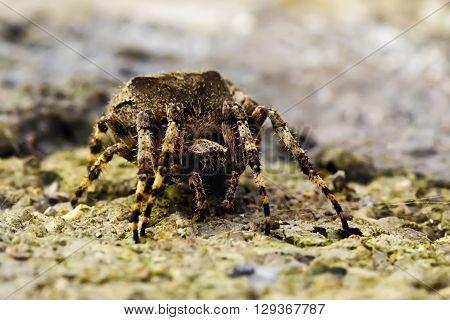 Spider in her terrain, originally up side down
