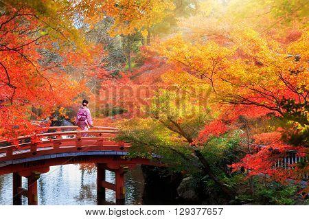 Wooden bridge in the autumn park Japan