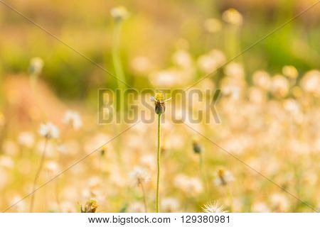 The summer meadow with wild flowers and warm tone