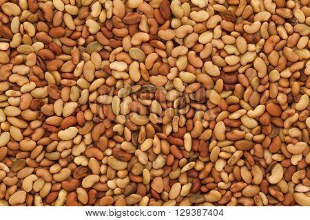 Macro closeup background texture of Organic Alfalfa or lucerne (Medicago sativa) seeds.