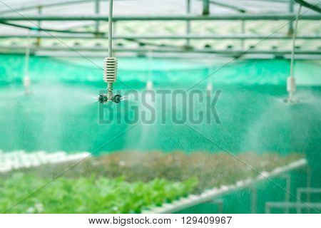 watering system in Vegetables hydroponics garden Organic hydroponic vegetable cultivation farm