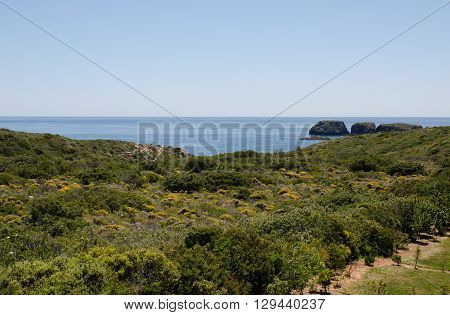 Heathland and sea in Portugal near Sagres bay