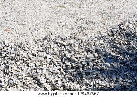 Sea Shell Mound Background