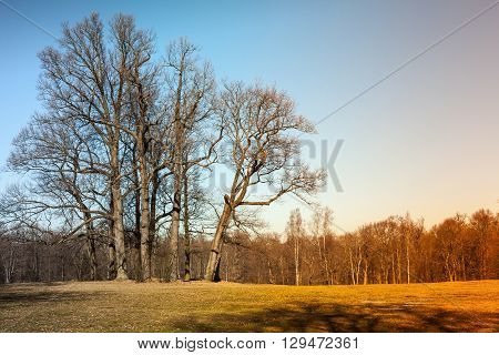 Toned Autumn Landscape With Bare Trees