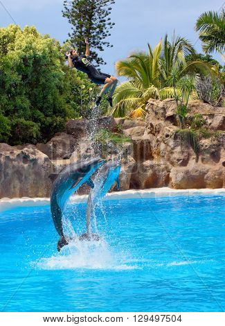 PUERTO DE LA CRUZ, TENERIFE - JULY 12: Dolphin show in the Loro Parque, which is now Tenerife's second largest attraction with biggest dolphin pool on July 12, 2014 in Puerto De La Cruz, Tenerife