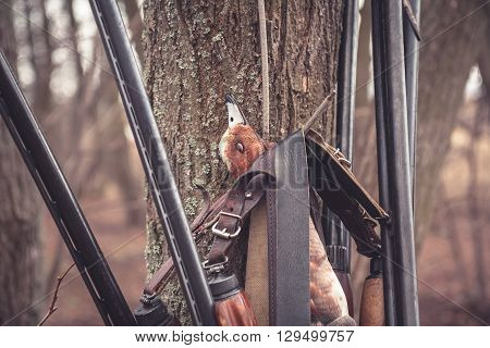 Hunting shotguns hanging on tree with prey after successful duck hunting