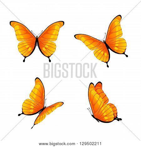 Set of four orange butterflies isolated on white background, illustration.