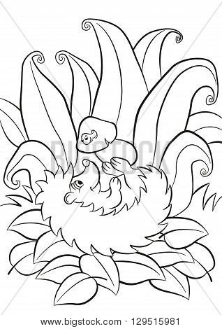 Coloring pages. Little cute kind hedgehog lays and holds the mushroom in the paws. There is small funny worm in the mushrum. The worm and the hedgehog smiles. There are plants grass and leaves around. Autumn.
