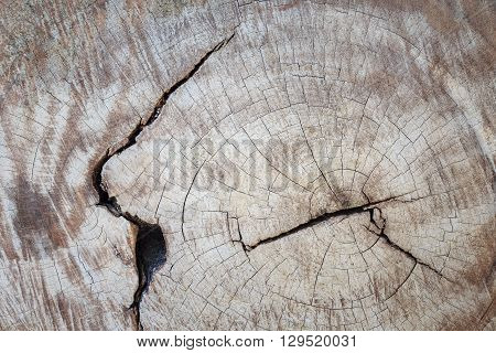 Cracked Section Of Wood Texture For Background