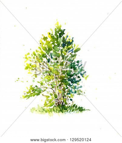 green bush, lit by the sun drawing by watercolor, aquarelle sketch of spring shrub, painting garden tree, hand drawn art background