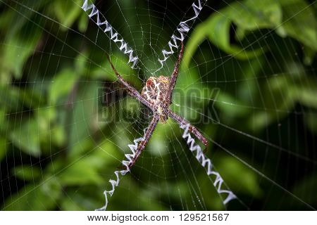 Close Up Spider On Web In The Garden