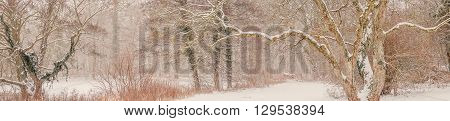 Magical Forest Covered With Snow In The Winter
