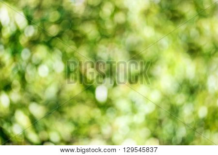 natural green background in the sunlight bokeh