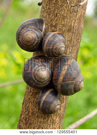 Five snails on the tree trunk over blurred background