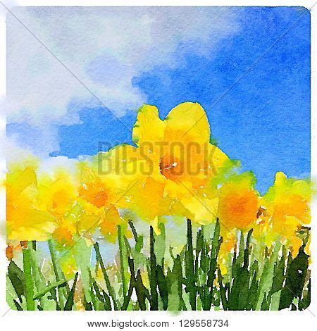 A digital watercolor painting of daffodils on a sunny day.