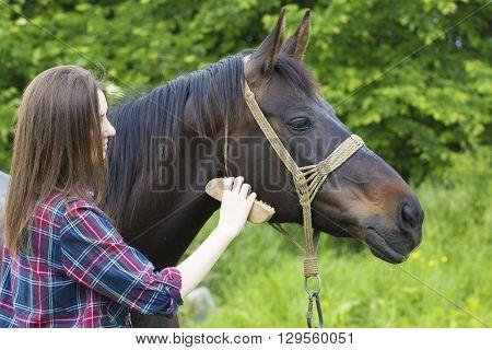 Teenager giril is grooming brown cute mare