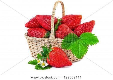 Strawberry basket closeup. Fresh strawberries isolated on white background.