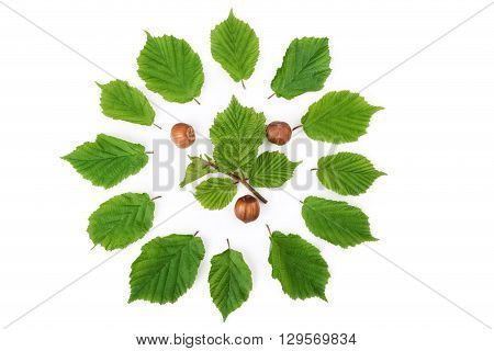 Hazelnuts pattern with green leaves in round shape on white. Top view.