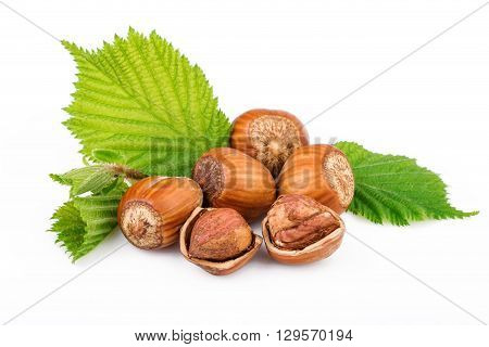 Hazelnuts with green leaves on white background