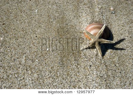 starfish with clam