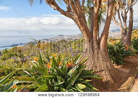 Unusual tree in Madeira Botanical Garden Funchal Portugal poster