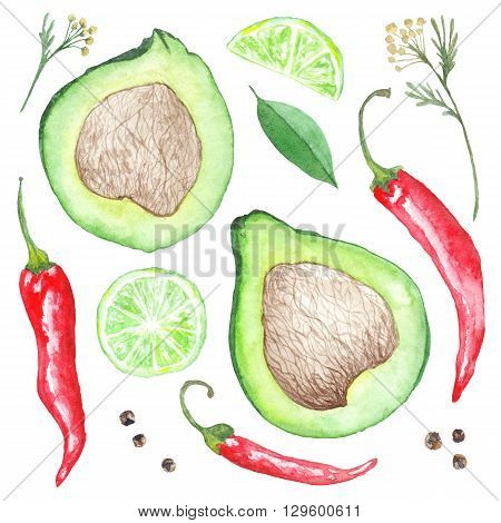 Collection of hand-painted spices, avocado and lime illustrations isolated on white background