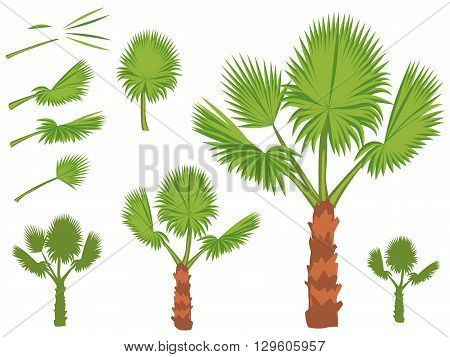 Set of fan palm round leaves. Fan Palm Tree formed from these leaves. Illustration on white background.