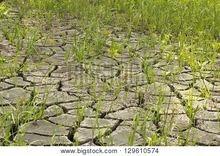 soil and grass during drought cracks in the land of drought